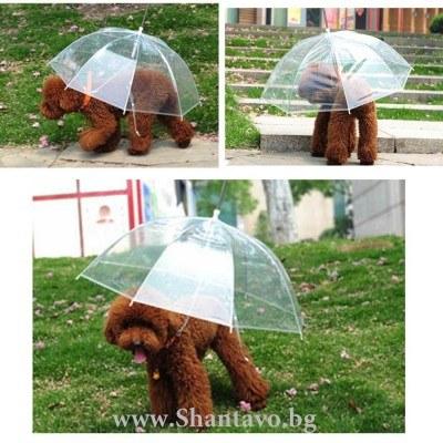 Удобен чадър с повод за куче