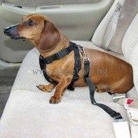 Предпазен колан за кучета и котки за автомобил